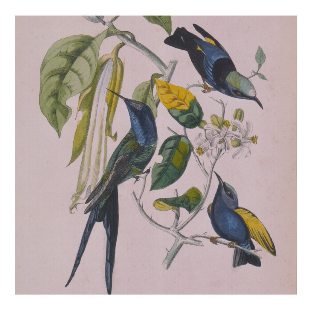 A painting featuring three hummingbirds rendered in blue, green and yellow