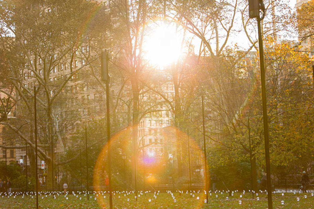Sunlight peeks over a building creating sun spots between the trees behind a field of suspended orbs