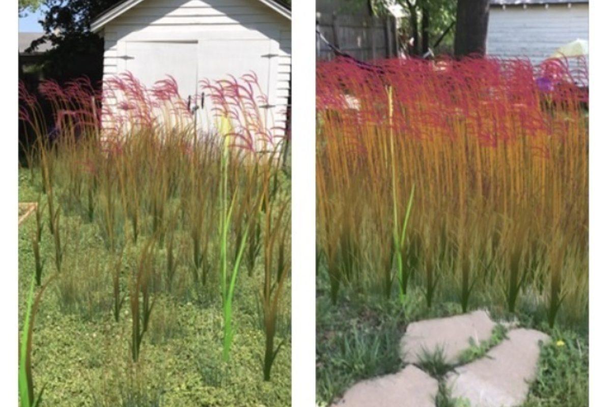 Tess Elliot prairie grass