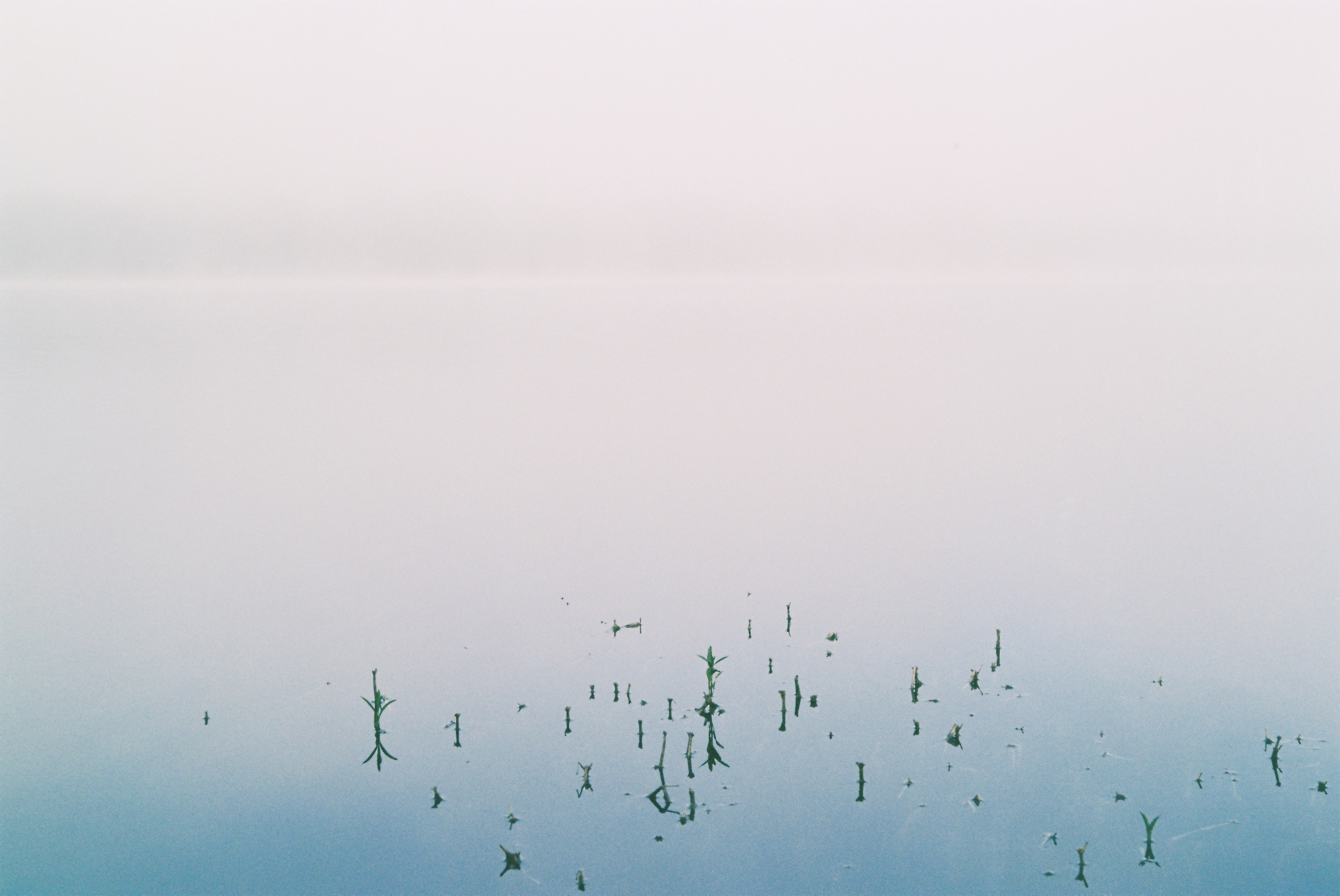 A photograph depicts a lake shrouded in fog