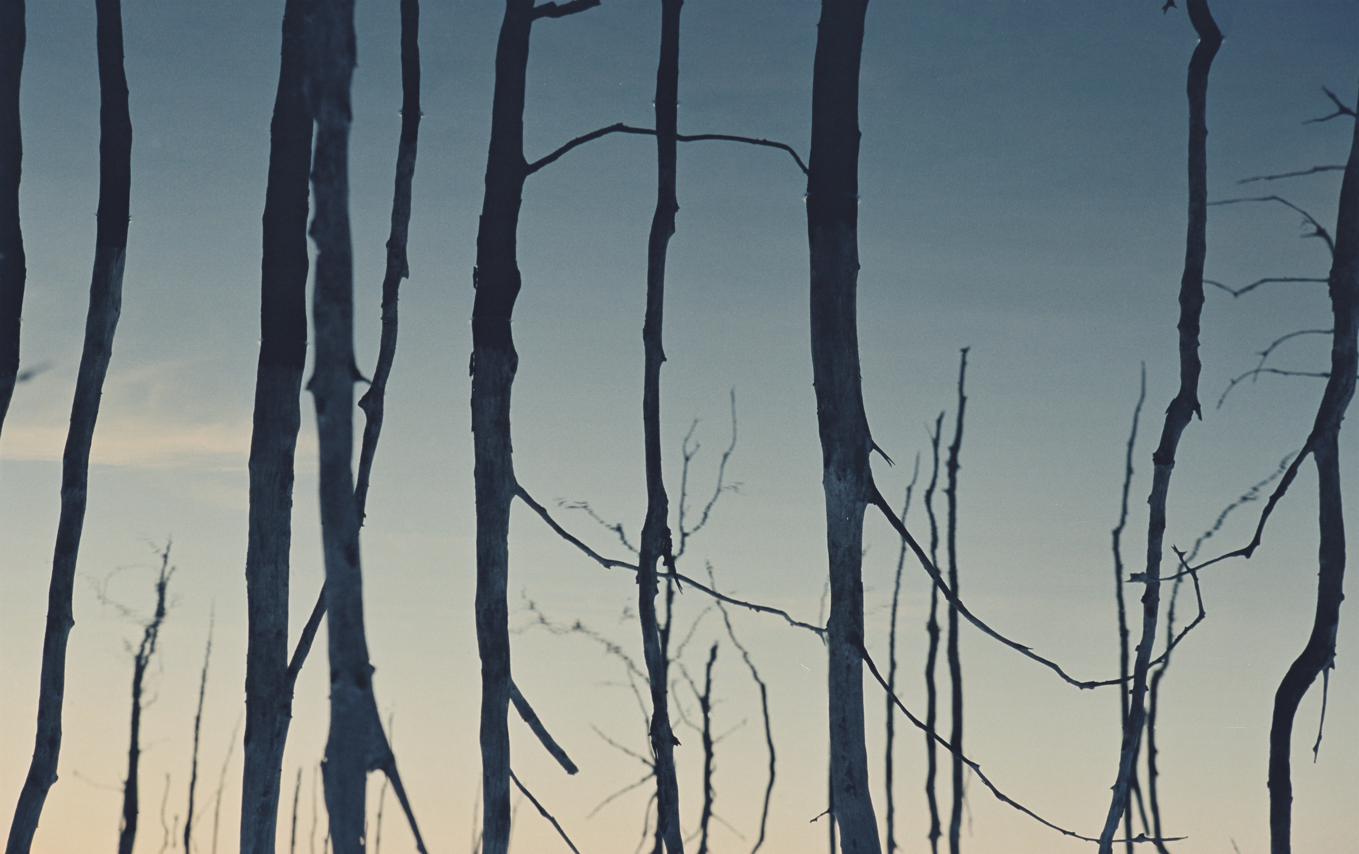 A film still depicts an image of bare tree branches reflected on water