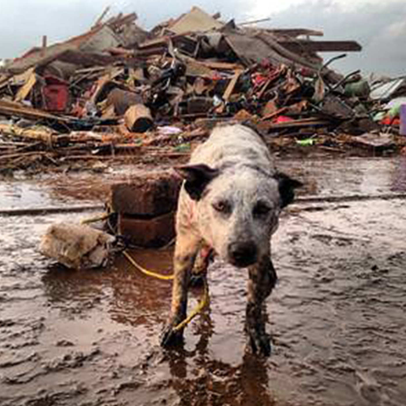 A photo of a dog tied to a concrete block in a flooded area, in front of a pile of rubble