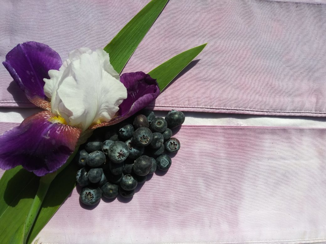 A photo of a purple flower, blueberries and two stalks of green vegetation against a light purple-dyed fabric