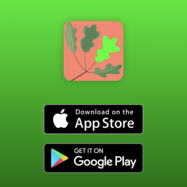 "An app icon featuring four green leaves, with icons below featuring the following text: ""Download on the App Store"" and ""Get It On Google Play"""
