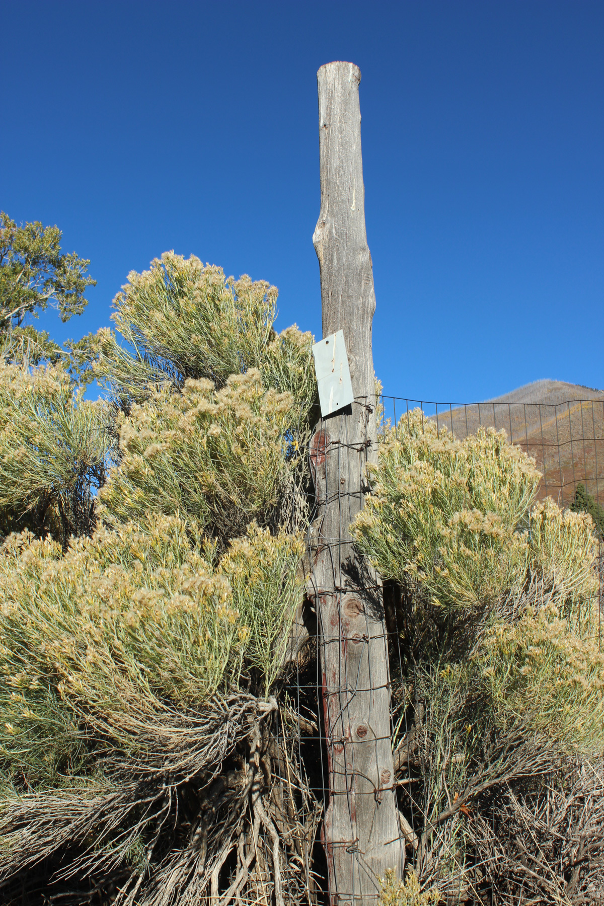 An image of a bare tree stump surrounded by desert vegetation on a cloudless day