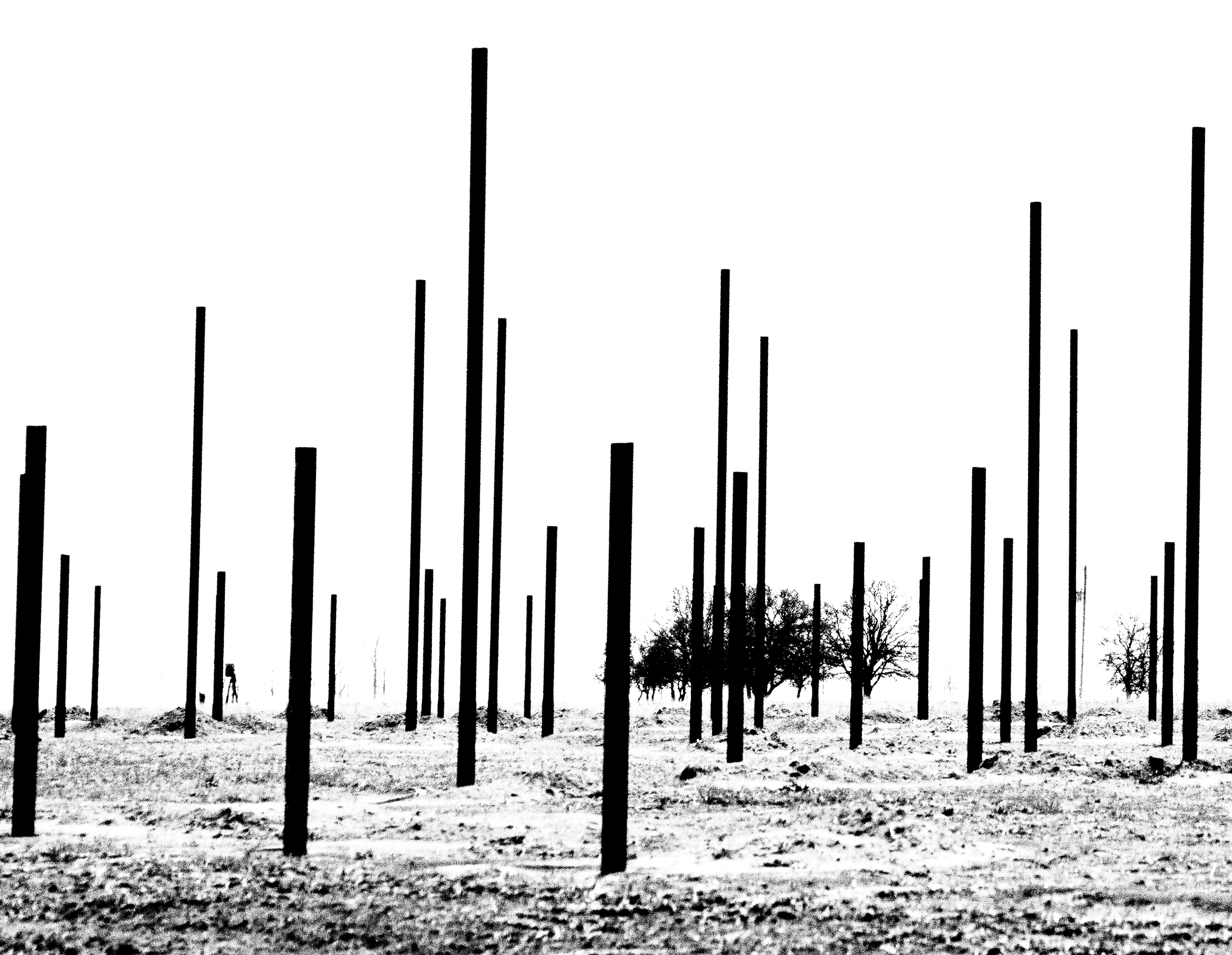 A black and white photograph depicts scrubby trees on an open plain, along with black poles jutting up from the ground