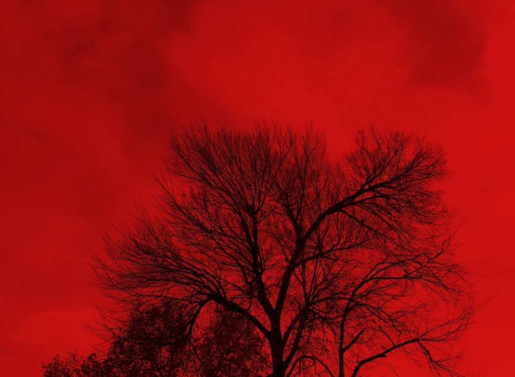 An artistic photograph depicts black tree branches against a saturated red sky